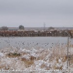 Kiowa_creek_wetlands